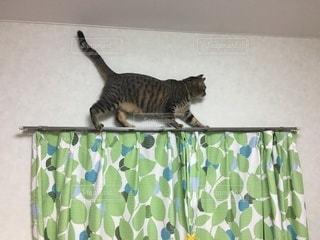 箱の中の猫の写真・画像素材[3317252]