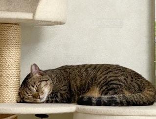 箱の上に横たわっている猫の写真・画像素材[3390524]