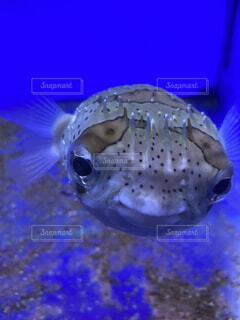 魚のクローズアップの写真・画像素材[3677896]