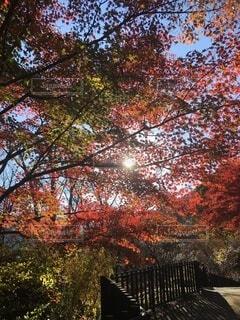 木のクローズアップの写真・画像素材[3724944]