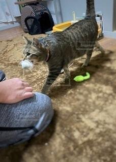 猫を抱いている人の写真・画像素材[4185369]