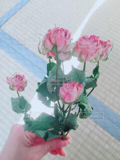 花のクローズアップの写真・画像素材[4246054]