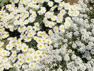 花のクローズアップの写真・画像素材[4384531]