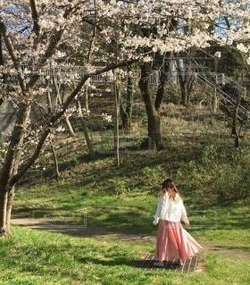 木の隣に立っている少女の写真・画像素材[4817810]
