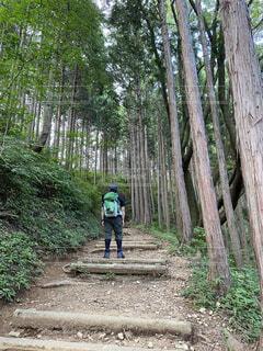 森の土の道にある木の写真・画像素材[4929154]