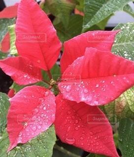 花のクローズアップの写真・画像素材[4935191]