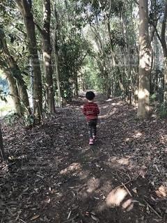 森を彷徨う少年の写真・画像素材[2609643]