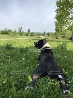 愛犬の後姿と美しい自然^^の写真・画像素材[2598265]