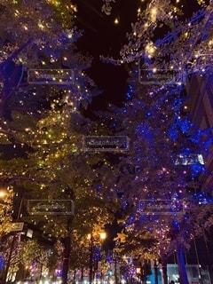 ライトアップの写真・画像素材[2734425]