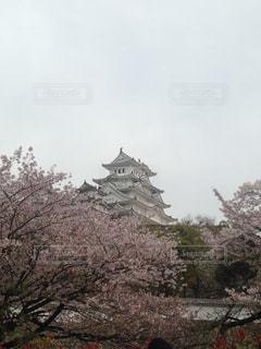 空,花,桜,屋外,城