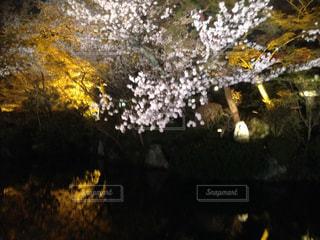 花,桜,樹木,鏡池