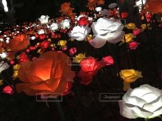 光る薔薇の写真・画像素材[2631501]