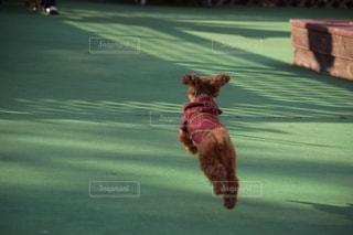 犬の写真・画像素材[2675446]