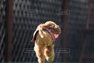 衣装を着た犬の写真・画像素材[2700331]