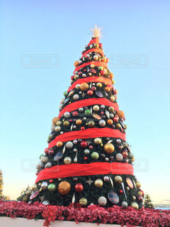 クリスマスツリーの写真・画像素材[2823552]