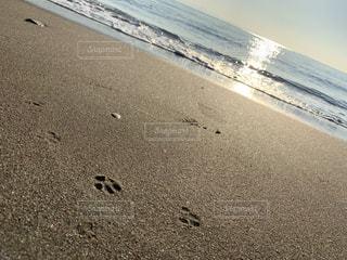 自然,風景,海,空,屋外,太陽,砂,ビーチ,砂浜,水面,海岸,足跡,光,トイプードル,朝陽,足あと