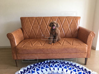 居間に座っている犬の写真・画像素材[2925159]