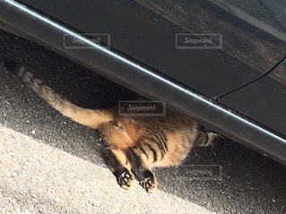 猫,動物,足,車,ペット,人物,地面,お尻,尻尾,ネコ