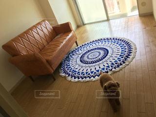 敷物の上に横たわる猫の写真・画像素材[2978536]