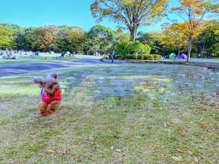 赤いフリスビーを持つ犬の写真・画像素材[2982594]