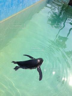 水のプールで泳ぐ犬の写真・画像素材[2994193]