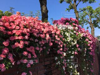 植物の上のピンクの花の写真・画像素材[3052871]