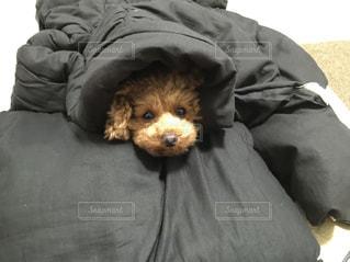ベッドに横たわっている犬の写真・画像素材[3171082]