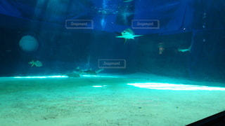 サメの写真・画像素材[2669273]