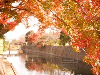 川と紅葉の写真・画像素材[2602204]