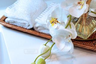 お花の香りのパウダールームの写真・画像素材[764198]