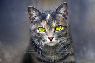 猫目線の写真・画像素材[2297614]