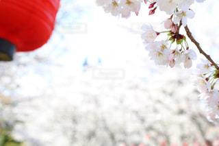 花のクローズアップの写真・画像素材[2988203]