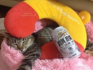 猫,家,グラス,乾杯,ドリンク