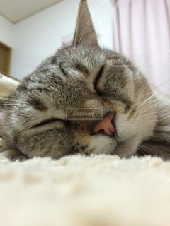 猫,動物,屋内,ペット,人物,ネコ,おやすみ!,すやすや〜
