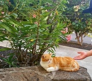猫,花,動物,屋外,手,ペット,人物,花壇,草木,のどか,ネコ