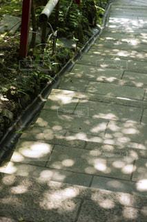 水玉の影の写真・画像素材[2608922]