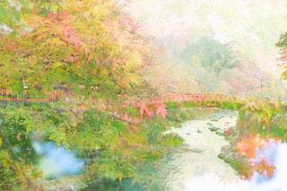 秋の日光の写真・画像素材[2616954]