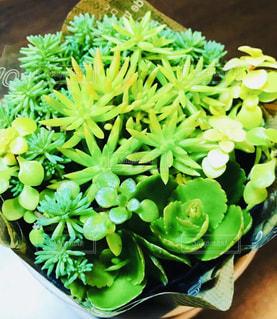 緑の植物のクローズアップの写真・画像素材[2726630]