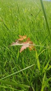 小さい秋見つけたの写真・画像素材[2613644]