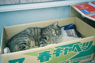 緑の箱の上に座っている猫の写真・画像素材[2721185]