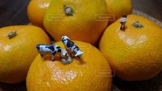 テーブルの上のオレンジのグループの写真・画像素材[3833814]