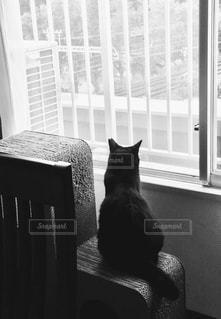 黒猫の写真・画像素材[2620968]