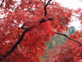 秋の写真・画像素材[2630497]