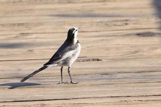 砂浜の上に立つ鳥の写真・画像素材[2873480]