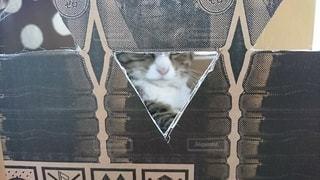 猫,動物,屋内,ペット,人物,丸,三角,鼻,手作り,ネコ,段ボール箱,黄土色,キャットハウス