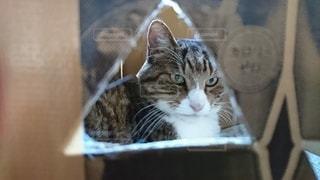 猫,動物,屋内,ペット,人物,ガムテープ,三角,手作り,ネコ,段ボール箱,黄土色,キャットハウス