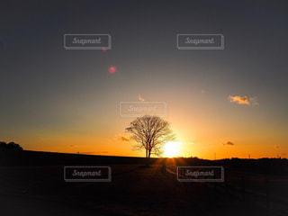 風景,空,太陽,夕暮れ,光,樹木