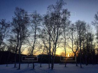 雪の中の木の写真・画像素材[2832609]