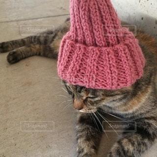 帽子をかぶった猫の写真・画像素材[2687716]