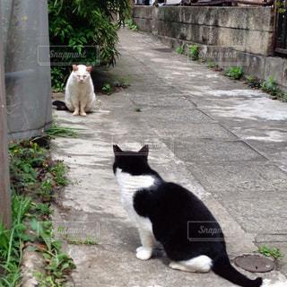 猫の写真・画像素材[202353]